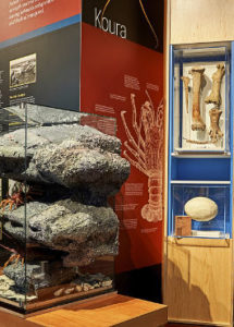 kaikoura museum discover natural history